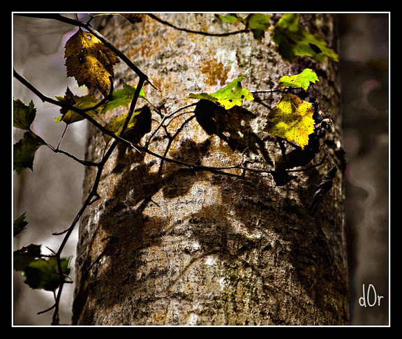 Trunk of birch tree with yellow and green leaves