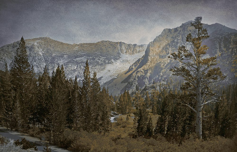 Mountain and trees in Yosemite